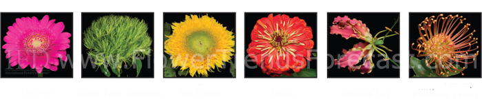 Flower Trends Forecast 2014 Confetti Flowers.  Gerbera, Green Trick Dianthus, Sunflower, Zinnia, Gloriosa Lily, Pincusion Protea