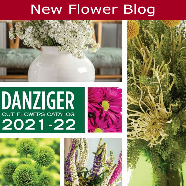 Stay up to date on the latest flower introductions