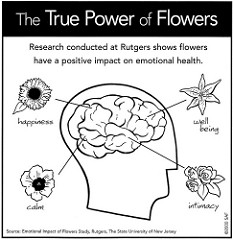 The True Power of Flowers