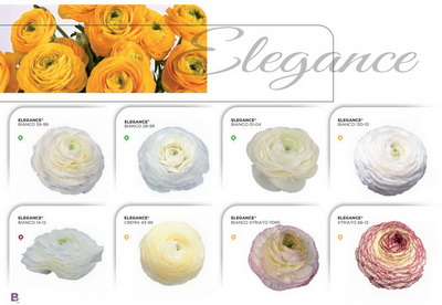 Get Your Ranunculus On