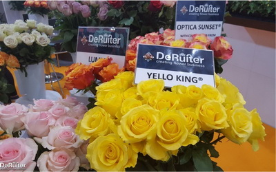Flower trends forecast new flowers founded almost a century ago deruiter has been continuously breeding and improving cut roses see yellow king plus all the deruiter bred roses in the mightylinksfo