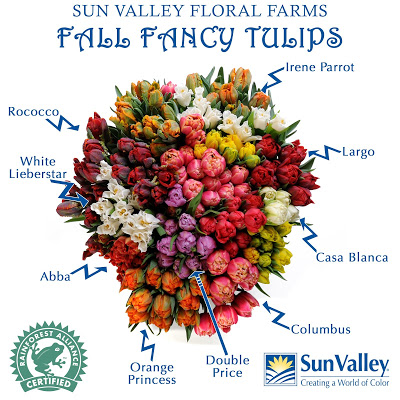 Fancy Tulip Guide