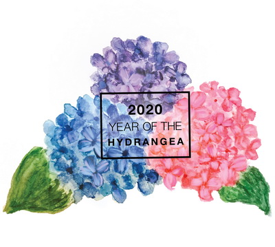 2020 Year of the Hydrangea