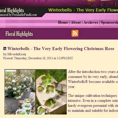 Winterbells - The Very Early Flowering Christmas Rose