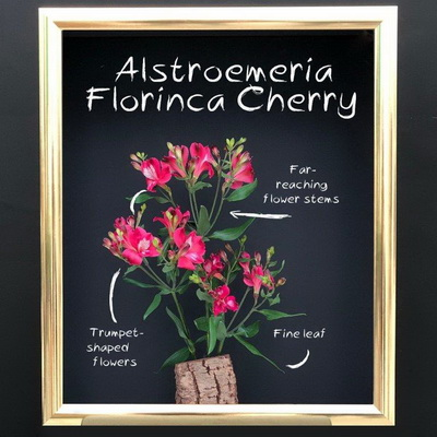 florinca cherry together2grow