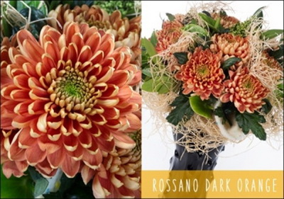 rossanno dark orange