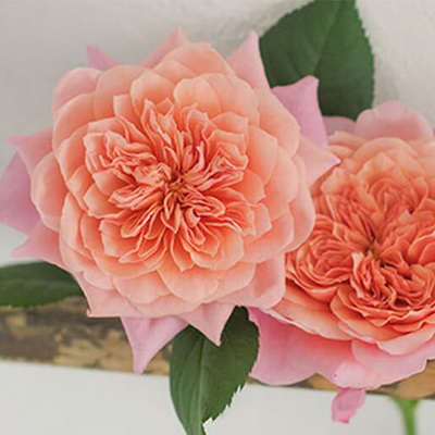 77c238098a Flower trends are constantly evolving. Here we link you with information  and topics impacting the world of changing flower trends, flower types, ...