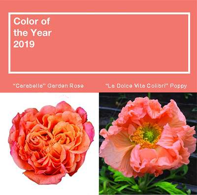 Peachy Keen Selections for 'Living Coral'