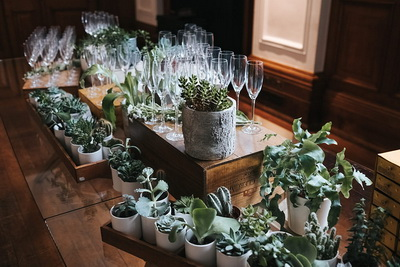 Succulents Setting the Table